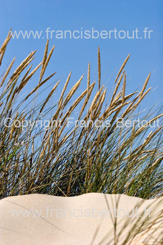 nord et pas de calais images diverses de la cote d 39 opale bord de mer oyats dunes 120 26441. Black Bedroom Furniture Sets. Home Design Ideas