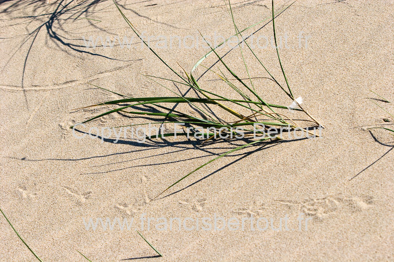 nord et pas de calais images diverses de la cote d 39 opale bord de mer oyats dunes 120 26454. Black Bedroom Furniture Sets. Home Design Ideas