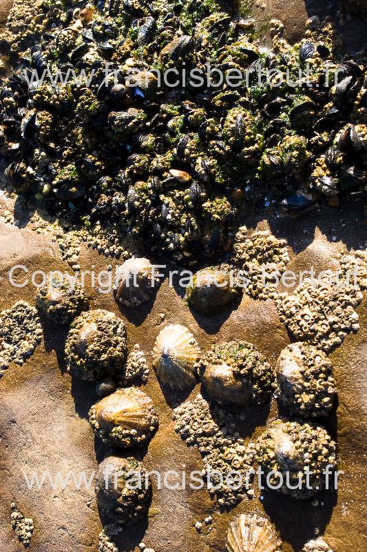 nord et pas de calais images diverses de la cote d 39 opale bord de mer coquillages a maree basse. Black Bedroom Furniture Sets. Home Design Ideas